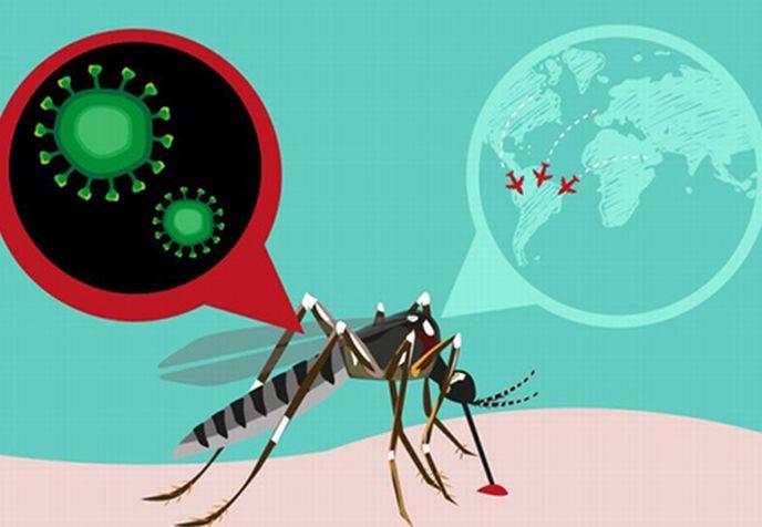 escambray today, zika, dengue, chikungunya, yellow fever