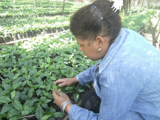 escambray today, women, agriculture