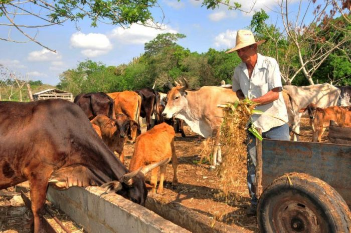 escambray today, cuban farmers' day, anap, agriculture, agricultural productions