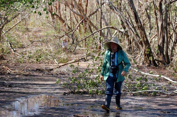 escambray today, hurricane irma, caguanes national park, mangrove, flora and fauna, yaguajay