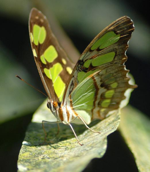 sancti spiritus biodiversity