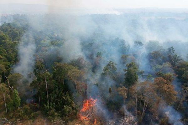 fires in amazonia