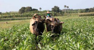 food production in sancti spiritus, central cuba