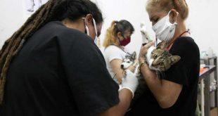 veterinary clinic in sancti spiritus, central cuba